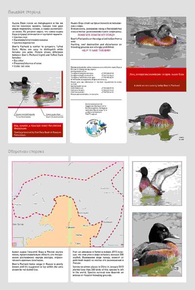 Leaflet to report sightings of Baer's Pochard in Russia. EAAFP supports surveys in Russia in 2013. © EAAFP