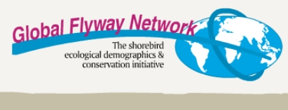© Global Flyway Network (GFN), the shorebird ecological demographics & conservation initiative