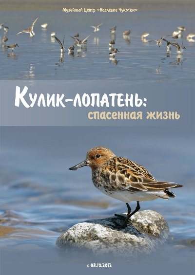 Spoon-billed Sandpiper Conservation Exhibition in Anadyr, Chukotka, Russia